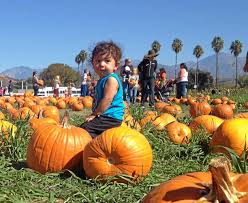 Cal Poly Pumpkin Patch 2016 by Cal Poly Pomona U0027s Pumpkin Festival Pulls In Thousands U2013 Daily Bulletin