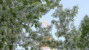 Focus movement from golden cross of church dome to white flowers