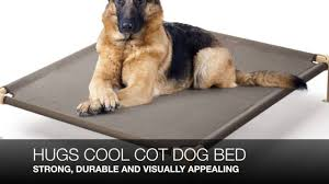 Kuranda Dog Beds by What Are The Best Elevated Dog Beds For Large Dogs Youtube
