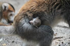 Brookfield Zoo Halloween 2014 by Chicago U0027s Cutest Baby Animals Of 2014 Chicago Sun Times