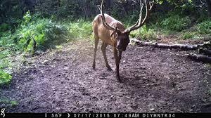 Elk Shed Hunting Utah by The Diy Hunter Hunt For The 7x8 Bull 2015 Utah Muzzleloader