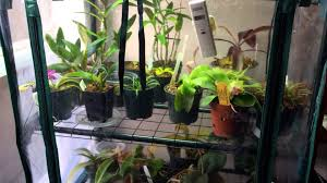 Grow Lamps For House Plants by How To Make A Cheap Diy Indoor Grow Chamber For Warm Growing