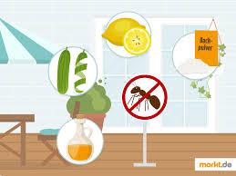 was tun gegen ameisen im haus und auf terrasse markt de