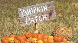 Marana Pumpkin Patch 2015 by 2015 Phoenix Az Halloween Pumpkin Patch Phoenix Az Real Estate
