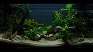 Easy Aquascaping - YouTube Home Accsories Astonishing Aquascape Designs With Aquarium Minimalist Aquascaping Archive Page 4 Reef Central Online Aquatic Eden Blog Any Aquascape Ideas For My New 55g 2reef Saltwater And A Moss Experiment Design Timelapse Youtube Gallery Tropical Fish And Appartment Marine Ideas Luxury 31 Upgraded 10g To A 20g Last Night Aquariums Best 25 On Pinterest Cuisine Top About Gallon Tank On Goldfish 160 Best Fish Tank Images Tanks Fishing
