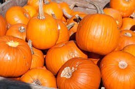 Circleville Pumpkin Festival by 9 Best Fall Food Festivals In America Reader U0027s Digest