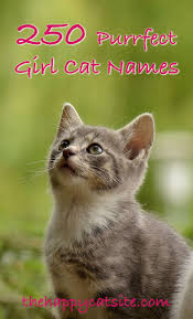 russian cat names best 25 grey cat names ideas on kitty cats grey