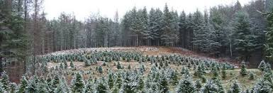 New Hampshire Vermont Christmas Tree Association Farm Fresh In Farms For Sale