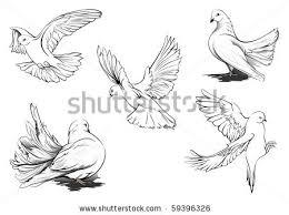 Drawn dove flight sketch 1