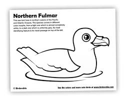 Birdorable Northern Fulmar Coloring Page