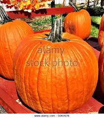Pumpkin Patch Kiln Mississippi by 100 Caledonia Pumpkin Patch Ms Guide To Pumpkin Picking In