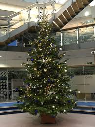 8ft Christmas Tree Uk by Real Christmas Trees In Your Office Look U0026 Smell Wonderful