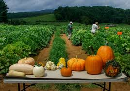 Pumpkin Patch Farms Raleigh Nc by Insect Management On Cucurbit Vegetables In North Carolina North