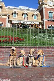 Water Beds N Stuff by Adorable Service Dog Patiently Poses For A Caricature At Disneyland