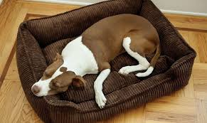 jax and bones dog beds will give your dog a comfortable sleep