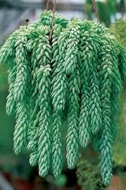 entretien plante grasse d interieur 5 conseils pour entretenir ses plantes grasses cactées et