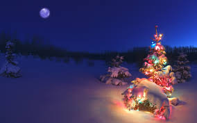Christmas Tree Cataract Seen In gorgeous in ground christmas tree holiday fun pinterest