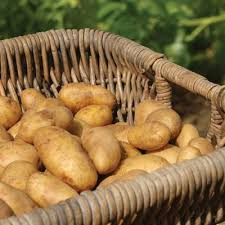 Potato Russet 50 Lb Bag