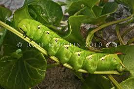 rod morris nature photography photo keywords green