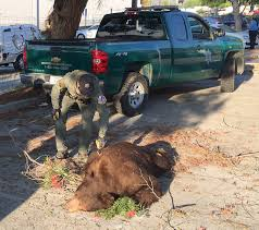 Pomona Woman Charged By Bear: 'If It Wasn't For That Officer, I'd Be ... Fairplex On Twitter Celebrate Summer At The Cheers Festival June Dine 909 Starbucks Mod Pizza Debut In New Upland Center Daily Competitors Revenue And Employees Owler Company Profile Whos Hungry For Some Good Food Leap In 2011 Fun Decanted Event Tuna Toast Los Angeles Co Fair Grounds Food Truck Thursday Pomona California Meals Wheels Campus Times Classic Hot Wheels County Beyond Attractions Amusement Firetruck Ama Expo Moving To Ca Nov 24 2018 Get Tickets From Farm Your Plate La Verne Magazine