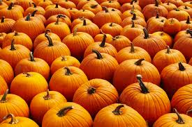 Local Pumpkin Farms In Nj by Pumpkin Patches In The San Francisco Bay Area