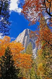 Fall Color Under The Washington Column Yosemite Valley National Park Photo By