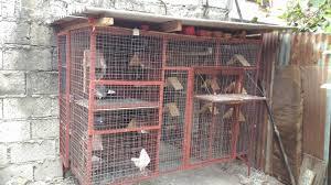 100 Pigeon Coop Plans Simple Pigeon Loft Design All In One Kalapati Loft Kabootar Machaan