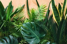10 zimmerpflanzen die ihre lebensqualität verbessern