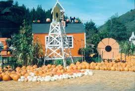 Pumpkin Patch Half Moon Bay Ca by Pastorino Farms Pumpkin Season 12391 San Mateo Road Half Moon