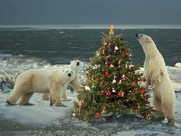 Fibre Optic Christmas Tree 7ft by Fibre Optic Christmas Trees For Sale Christmas Lights Decoration
