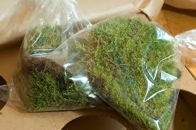 Driftwood Christmas Trees For Sale by Christmas Moss Caresheet Aquatic Mag