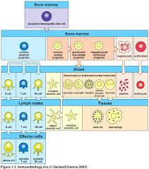 untersuchung tumorassoziierter immunprozesse nach behandlung