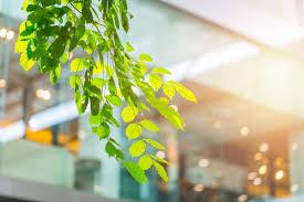 bureau eco bâtiment d eco ou intérieur vert d arbre d usine de bureau image