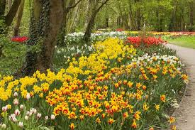 when to plant daffodils and other bulbs for a colourful garden all