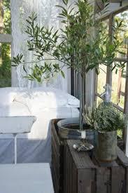terrasse gestalten leicht gemacht mit einem schönen olivenbaum