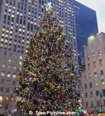 Christmas Tree Recycling Nyc by Christmas Trees Xmas Tree Images Photos Pictures Tree Pictures