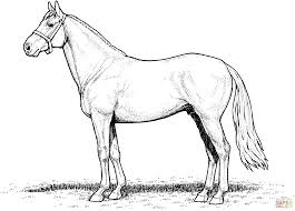 Realistic Arabian Horse Coloring Pages