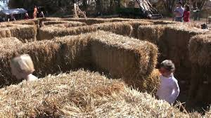 Pumpkin Patch Corn Maze Snohomish Wa by Cottonwood Farm Pumpkin Patch Youtube