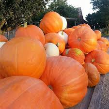 Southern Ohio Pumpkin Patches by Lincoln Ridge Farms In Convoy Ohio Is Home To Great Fall Fun