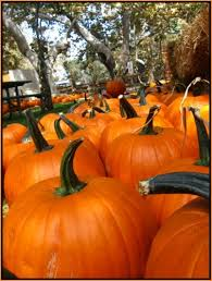 Pumpkin Patch Irvine University by 36 Best Irvine Images On Pinterest Bucket Lists Dream Rooms And