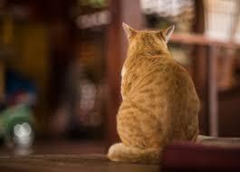 cat wont eat why won t my cat eat feline nutrition foundation