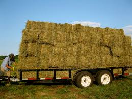 Hauling Hay | Lazy B Farm 3 Barns Lessons Tes Teach Hay Barn Interior Stock Photo Getty Images Long Valley Heritage Restorations When Where The Great Wedding Free Hay Building Barn Shed Hut Scale Agriculture Hauling Lazy B Farm With Photos Alamy For A Night Jem And Spider Camp Out In That Belonged To Richardsons Benjamin Nutter Architects Llc Filesalt Run Road With Hoodjpg Wikimedia Commons Press Caseys Outdoor Solutions Florist Cookelynn Project Dry Levee Salvage