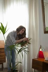 gesundheitsrisiken durch zimmerpflanzen im schlafzimmer
