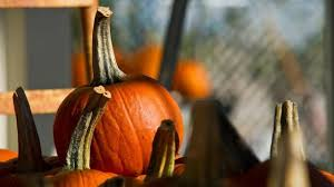 Pumpkin Patch College Station 2014 by Tickets For Life And Science U0027s Pumpkin Patch Express On Sale Next