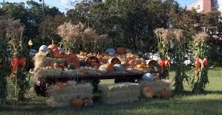 Pumpkin Picking Long Island Ny by Wickham U0027s Fruit Farm
