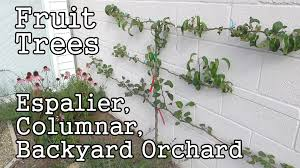 Interesting Small Backyard Orchard Pics Decoration Inspiration ... Backyard Farming Photo On Marvelous Fruit Trees Texas Plant A Tiny Orchard Hgtv Dwarf Peach Tree Peaches And Ctarines Pinterest 81 Best Pattern 170 Images On Garden And Berries In Small Mesmerizing 3 Fruit Trees For Small Space Yards Patios Youtube Backyards Gorgeous 135 Good For Yards Splendid Interesting Pics Decoration Inspiration Best To Grow Cool Glamorous Privacy Design 25 Ideas Patio