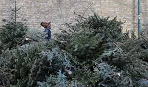 Christmas Tree Disposal New York City by Looking To Promote Coastal Restoration New Orleans Collects