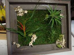 Wall Neoteric Design Inspiration Living Art In Conjunction With Light Weight Tillandsia Soil Less