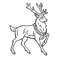 Reindeer Coloring Page A Pagesbell