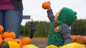 Glass Blown Pumpkins Seattle by King5 Com Favorite Washington Pumpkin Patches For Fall